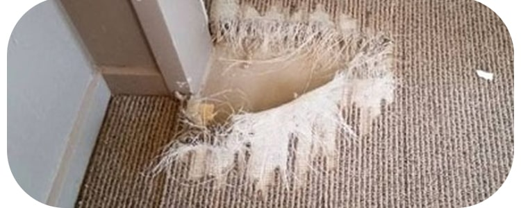 Best Carpet Repair South Yarra